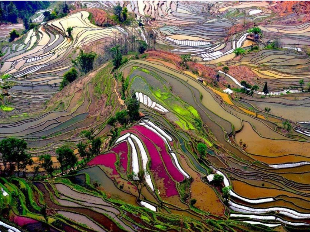 Yunnan rice