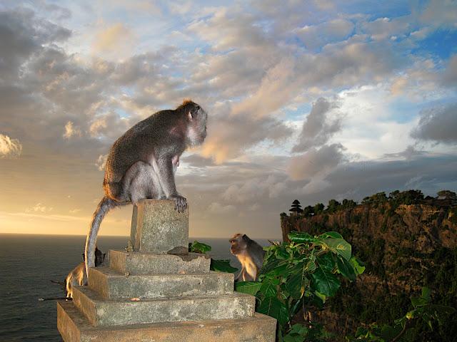 Bali-monkeys