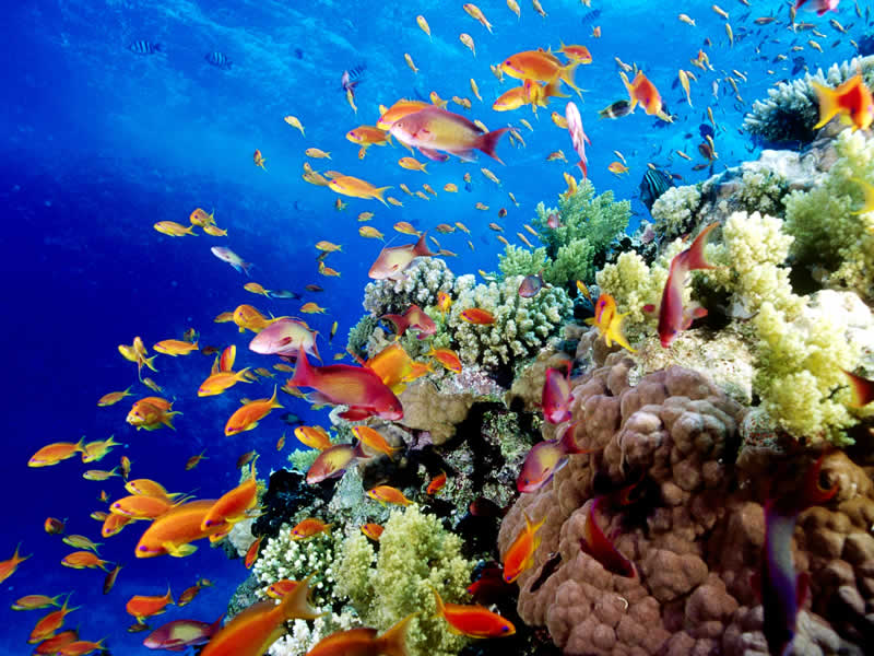 Great-Barrier-Reef-Holiday-Reef-Fish12