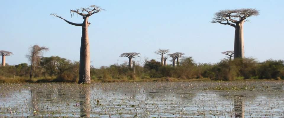 Madagascar environment