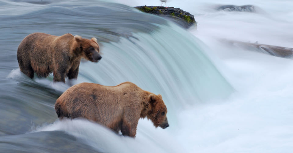 Ultimate-Alaska-Photo-1-brooks-falls