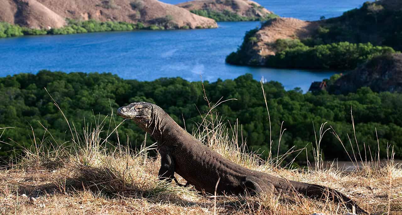Komodo_Island_wildlife