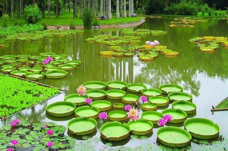 Guyana-botonical-gardens