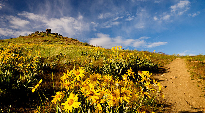 Sun-Valley-Summer-Wild-Flowers