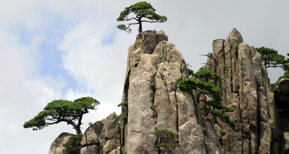 China Yellow Mountain_lone_trees