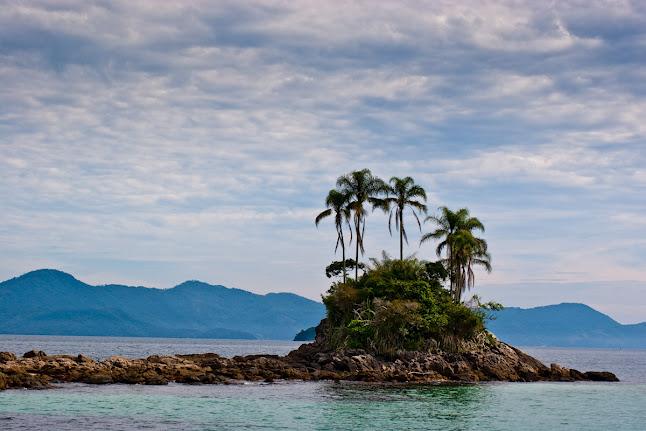 Rio-de-janeiro-palm-trees