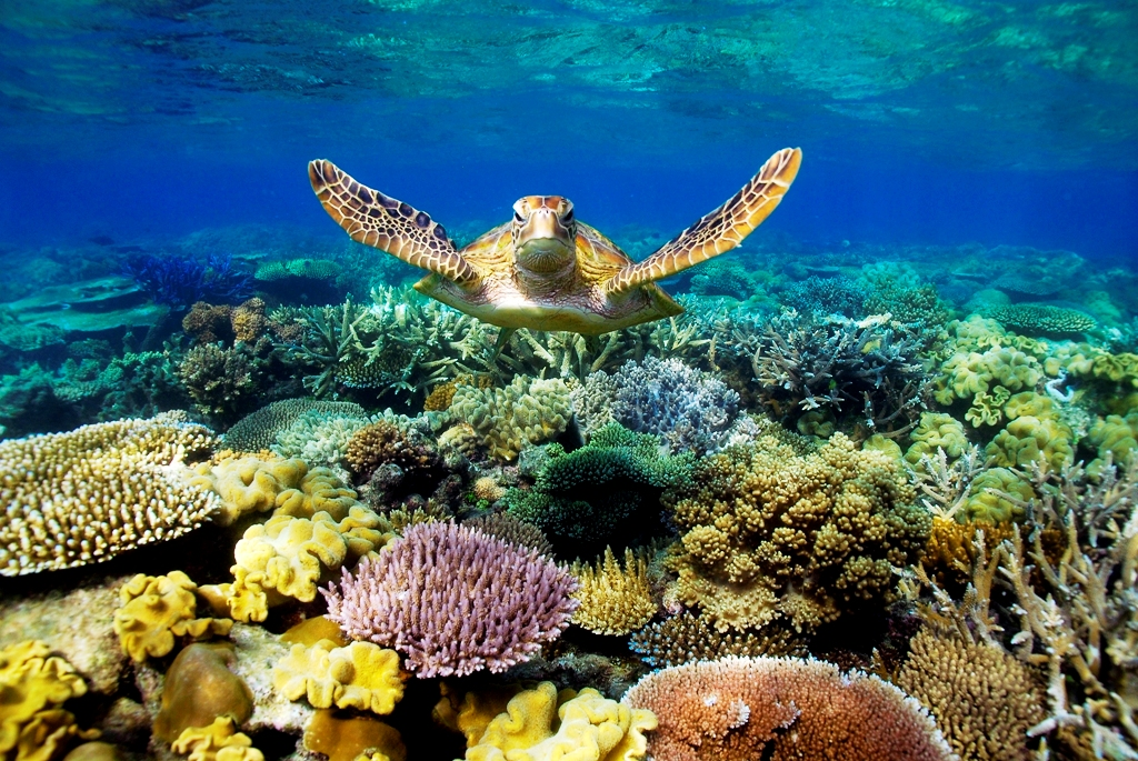 Australia-Great Barrier Reef