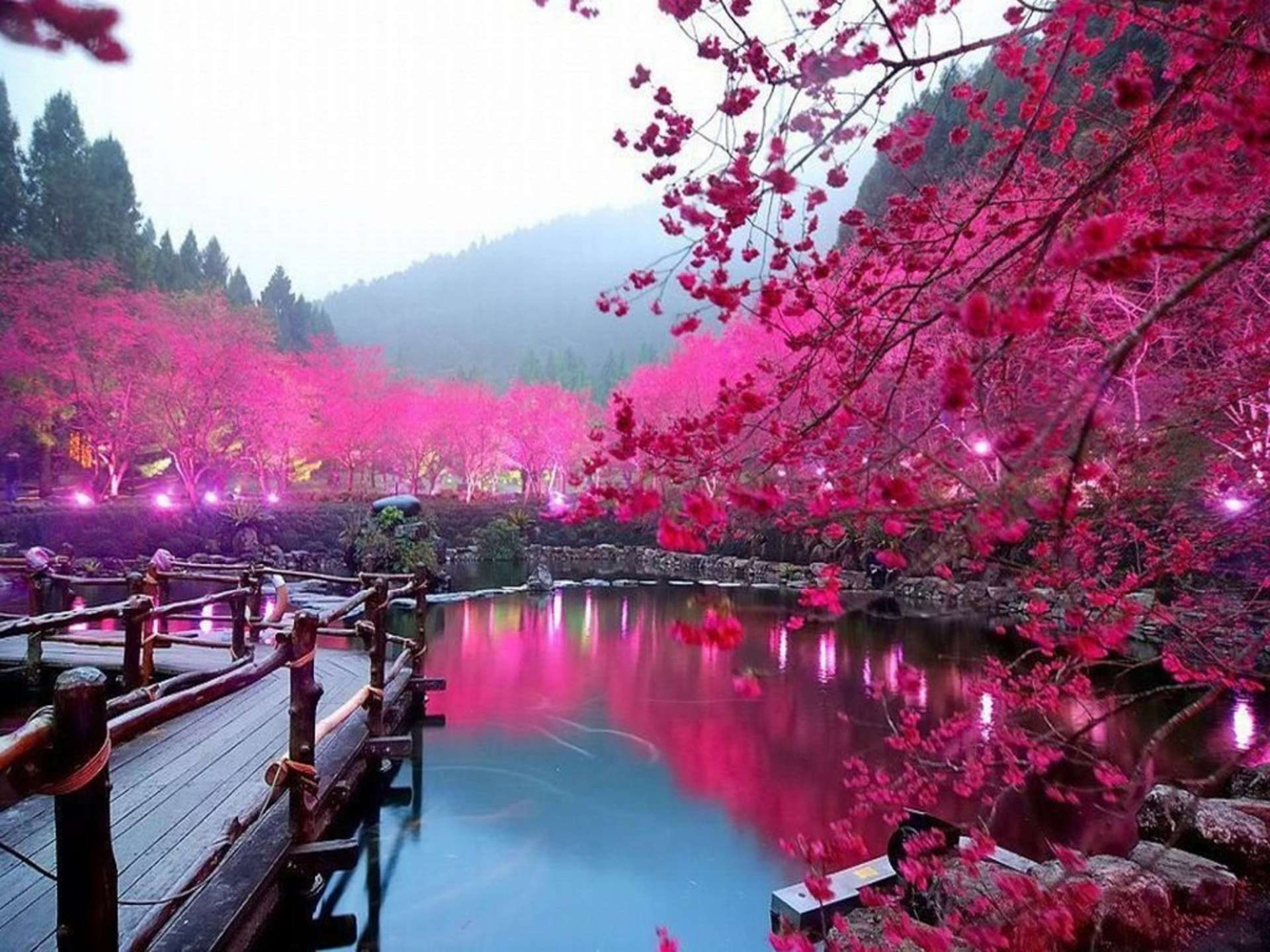 Lake-Sakura-Japan