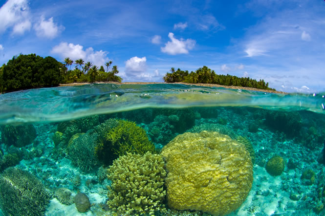 marshall_islands_coral_reef_lrg