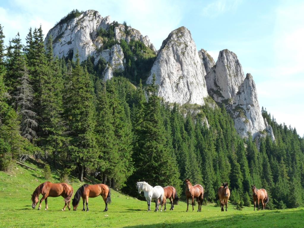free-horses-in-carpathian-mountains-romania-scenery