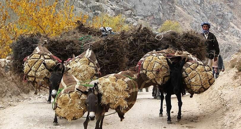 afghanistan3_589
