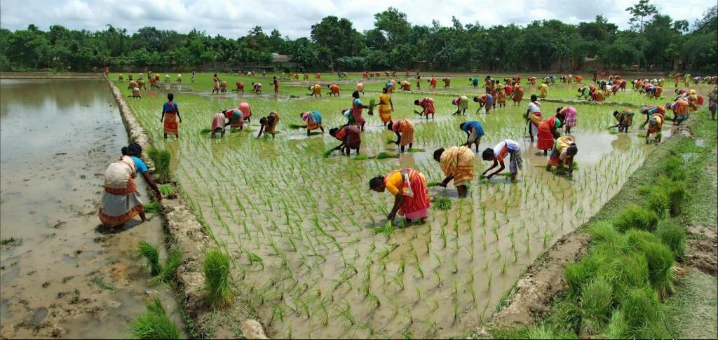 women-working-in-bangladesh