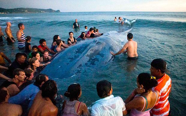 whale_nicaragua