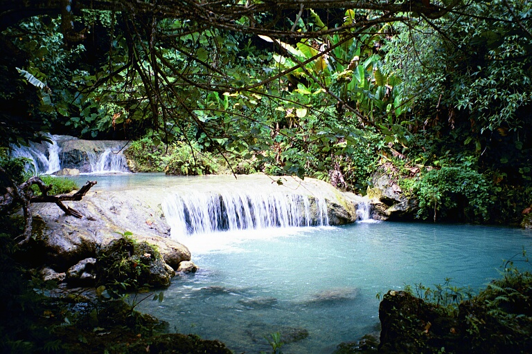 lush-vegetation-in-equatorial-rainforest