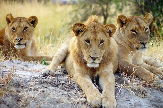 Botswana_animals