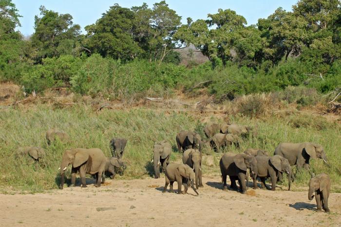 Equatorial-Guinea-Elephants
