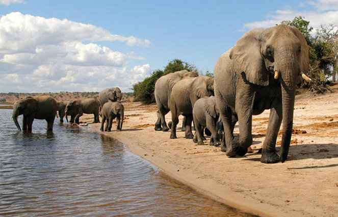 elephants_botswana_home_slider