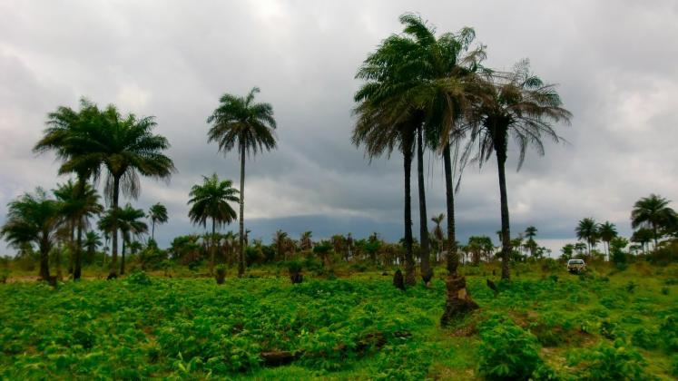 Green-Liberia-landscape-15098