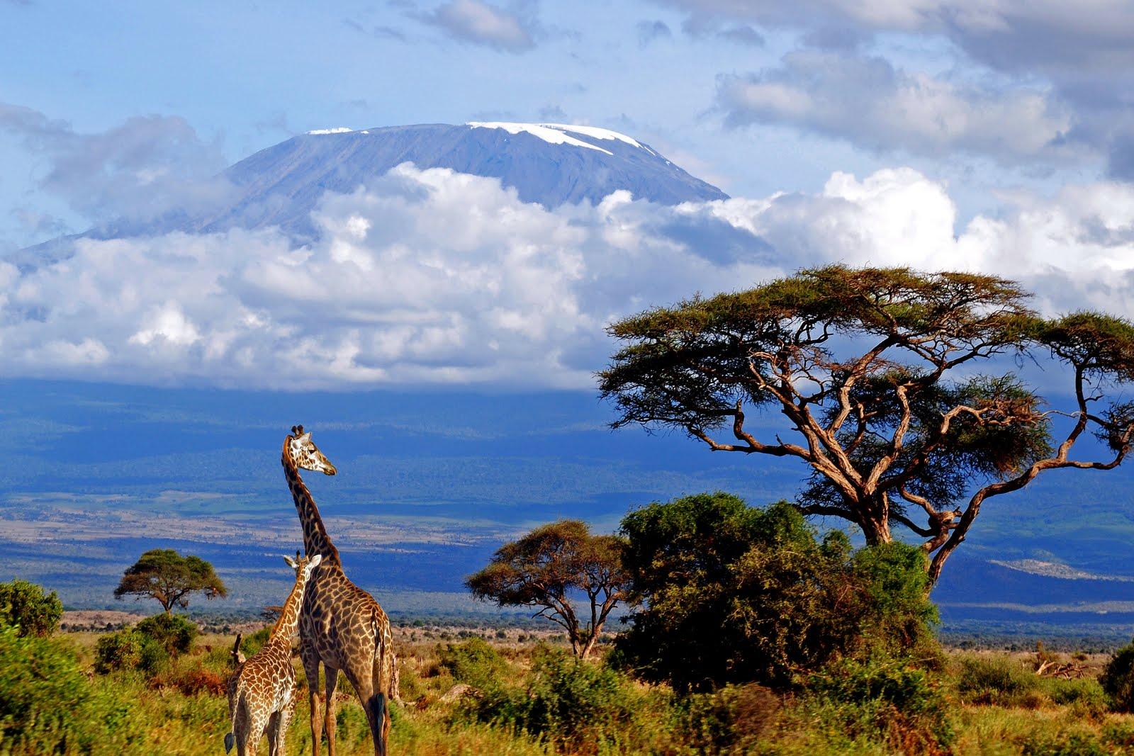 kilimanjaro-giraffe-Tanzania