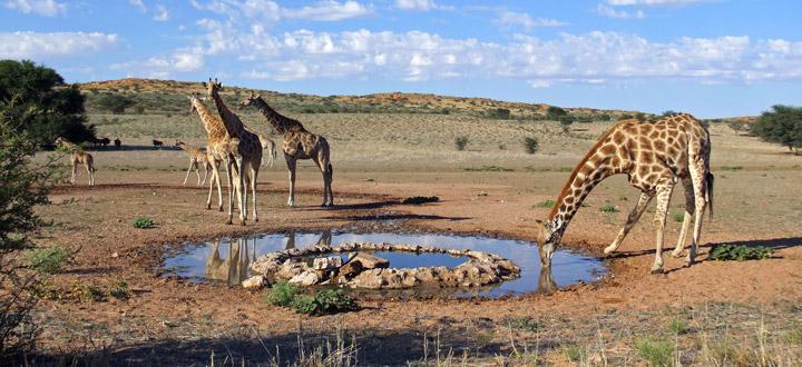 south_africa_kalahari-jpg
