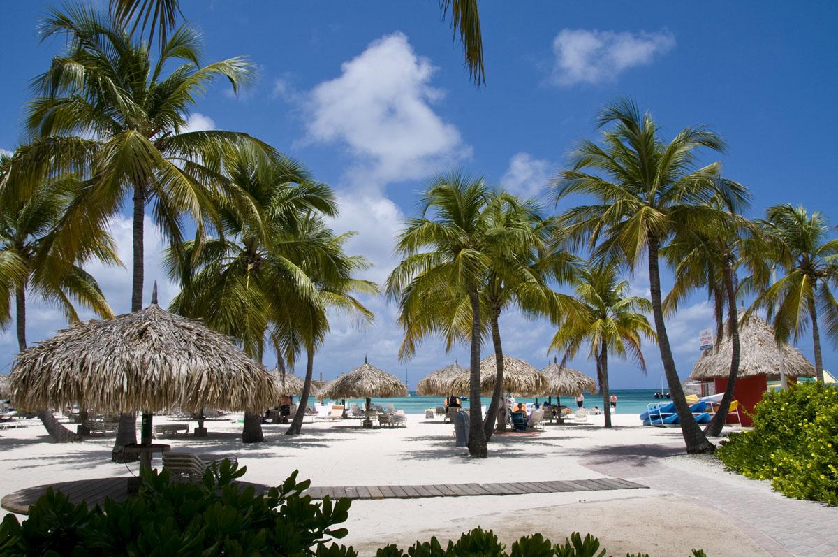 Aruba palm beach morning light