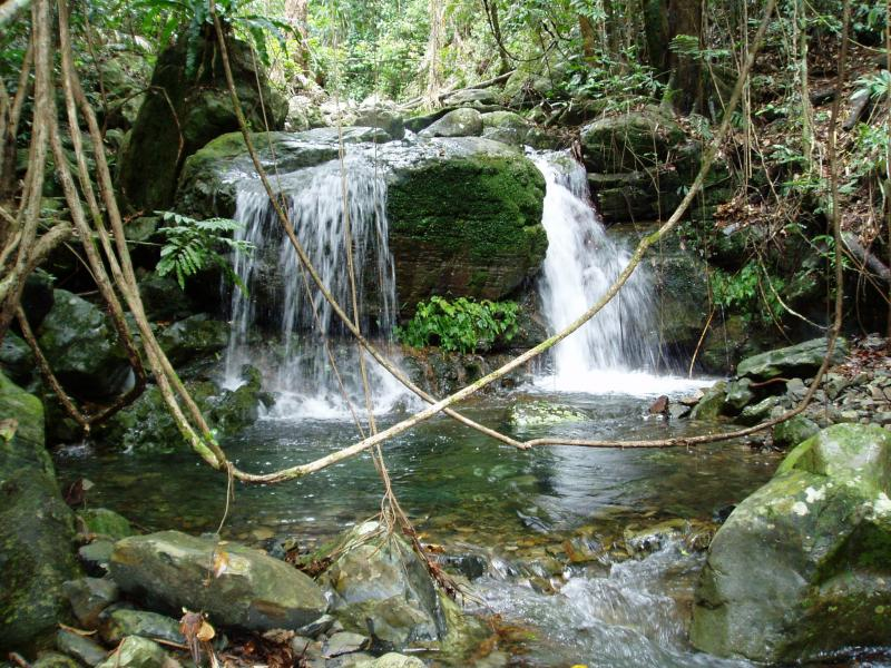 daintree-cape-tribulation-tour