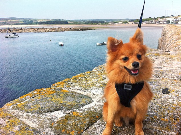 Five Reasons Why Your Dog will Love South Devon 3