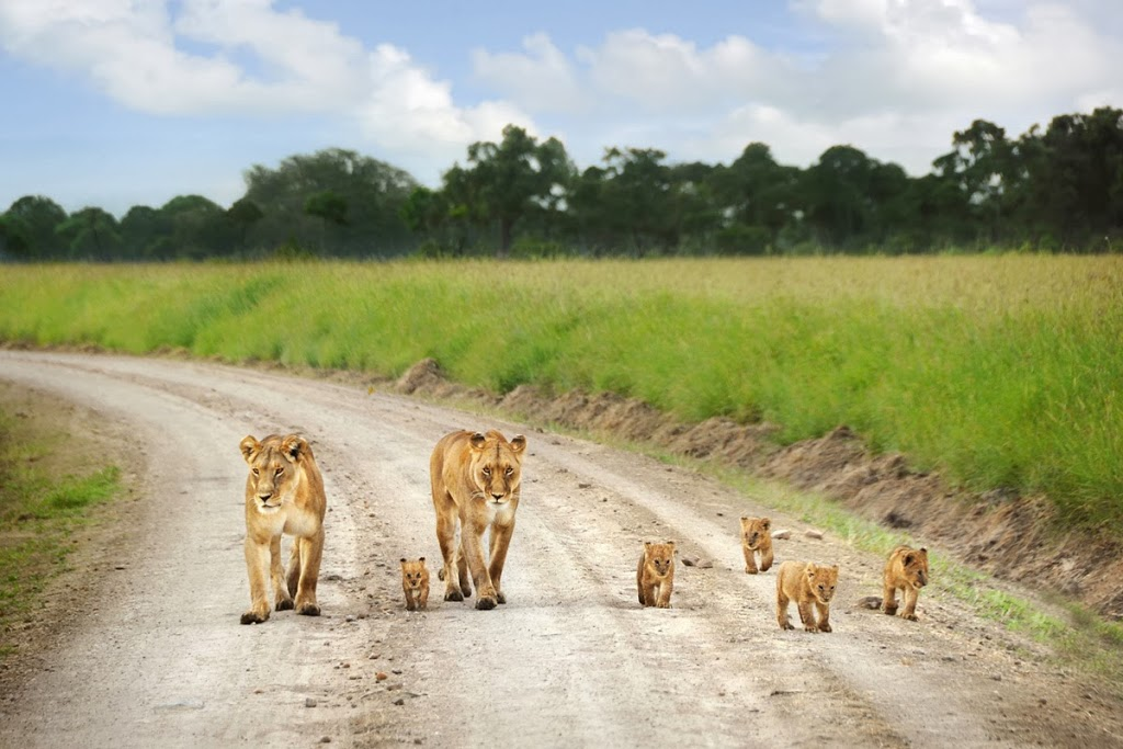 Best Hotels In Masai Mara