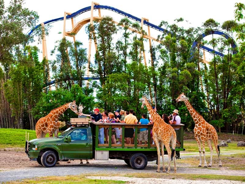 Busch Gardens Tampa Animal Tours