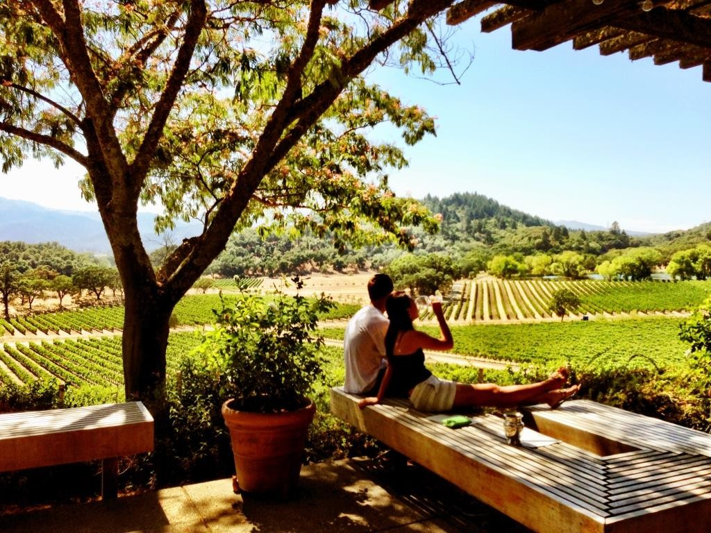 Napa Valley vine