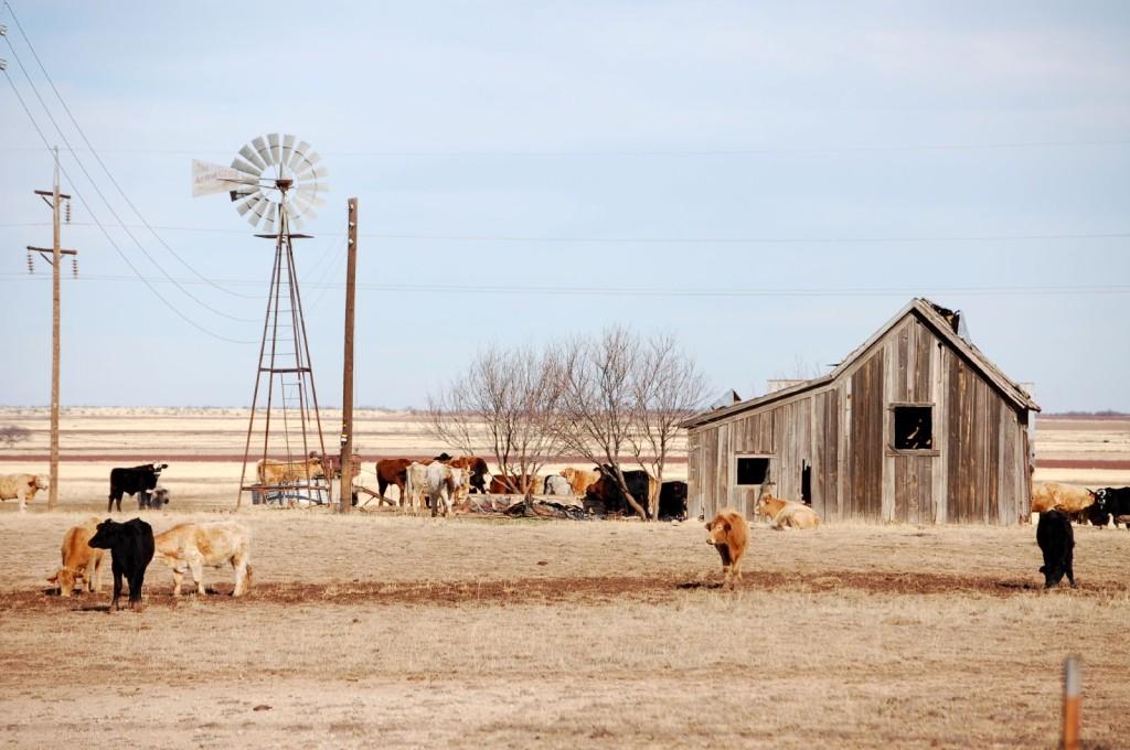 Texas_landscape_3